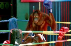 'Some people just care about money': Thailand under pressure over bizarre animal shows