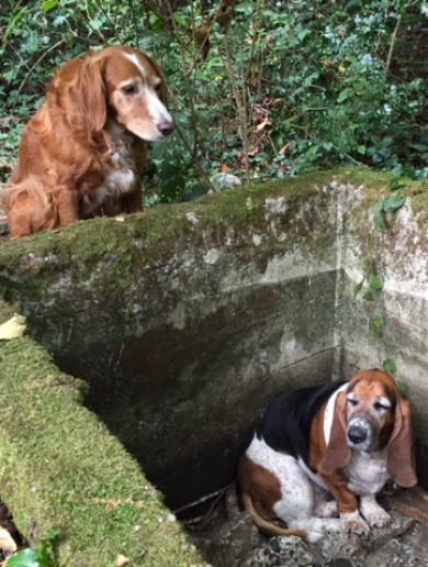 This dog watched over her friend for a week after she got trapped