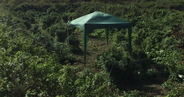 A hidden 'forest of cannabis' was found in London