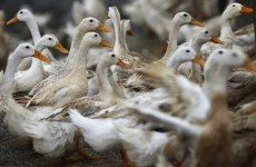 WHO delays decision on releasing new bird flu research