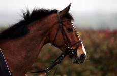 It's on: Kauto Star will run in Cheltenham Gold Cup