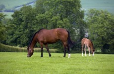 Ireland to share horse breeding knowledge with China