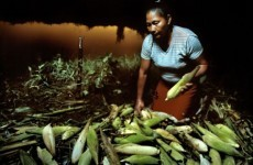 6 countries where global food crisis is taking terrible toll