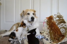VIDEOS: Meet the most patient dog in the world