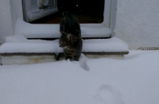 WATCH: 5 animals encountering snow for the first time