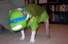 12 of the best Teenage Mutant Ninja Turtles costumes ever