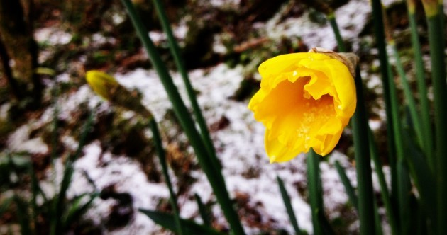SNOW DAY: Canal icicles, dogs and daffodils