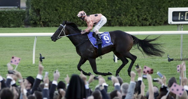 Black Caviar, one of the world's greatest racehorses, has retired