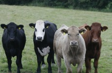 Gulf countries lift ban on Irish meat