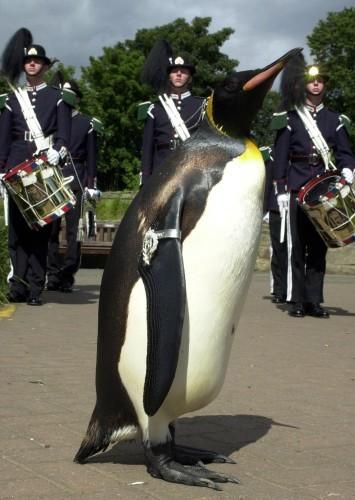 Edinburgh Penguin medal