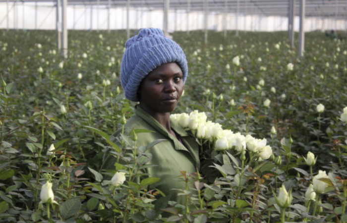 Kenya Flower Fortunes
