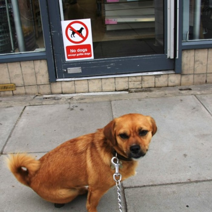 No Dogs - usefully at dog height because dogs can read...