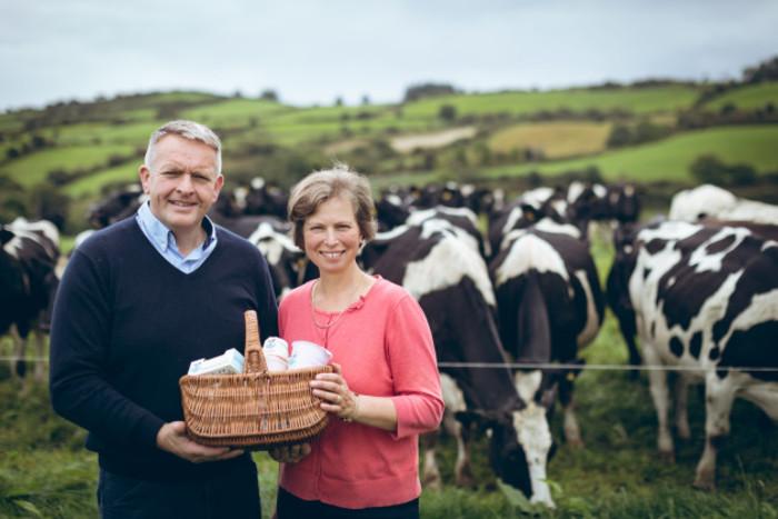 A&V&cows1 (1)