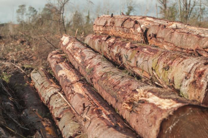 WoodLogsHarvest-1