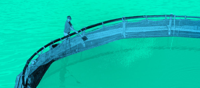 Troubled Waters project design featuring man maintaining a salmon farm