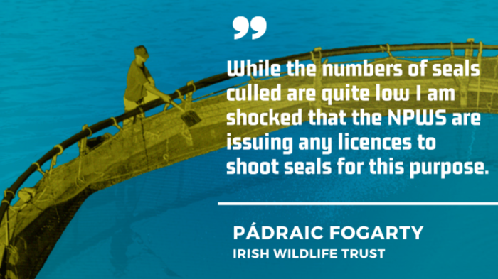 Pádraic Fogarty of the Irish Wildlife Trust - While the numbers of seals culled are quite low I am shocked that the NPWS are issuing any licences to shoot seals for this purpose.