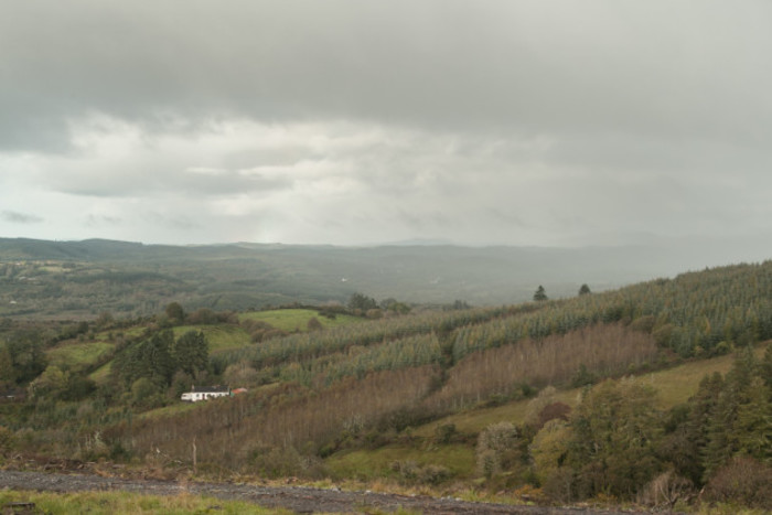 Conifer plantations in high nature value uplands in Co Leitrim