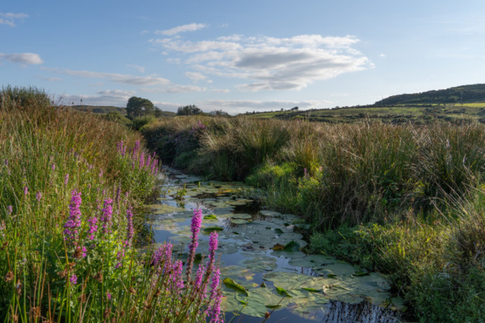 A biodiverse stream on peaty land with flowers along the banks on an eco-friendly farm in Co Mayo