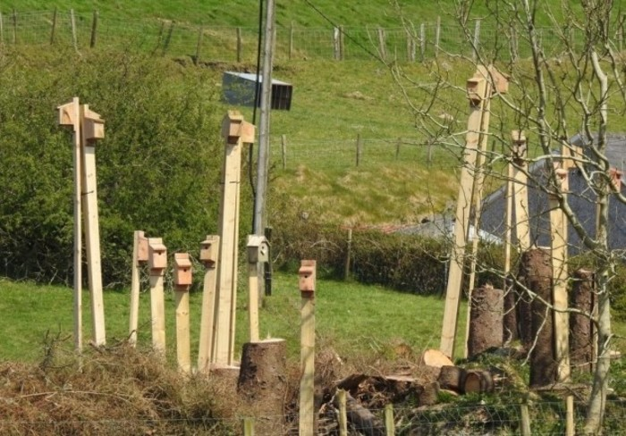 A group of around 10 bird boxes erected on a farm above cut down trees