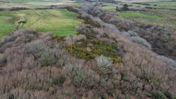 Aeriel photo of a native woodland in the Glendine Valley in Co Clare